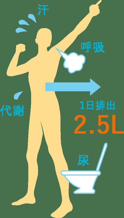 人間の成人の場合、日に約2.5L以上の水分が排出されます。